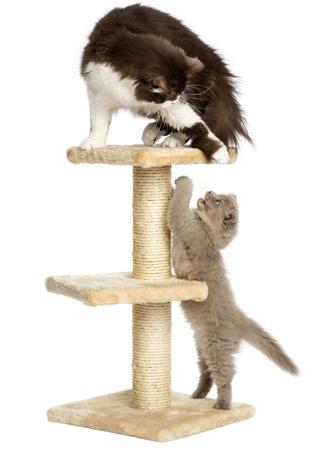 Birbiriyle anlaşan kediler evde yalnız kalabilir. Fakat evde onlara zararlı olabilecek eşyalar bırakmadığınızdan emin olmalısınız.